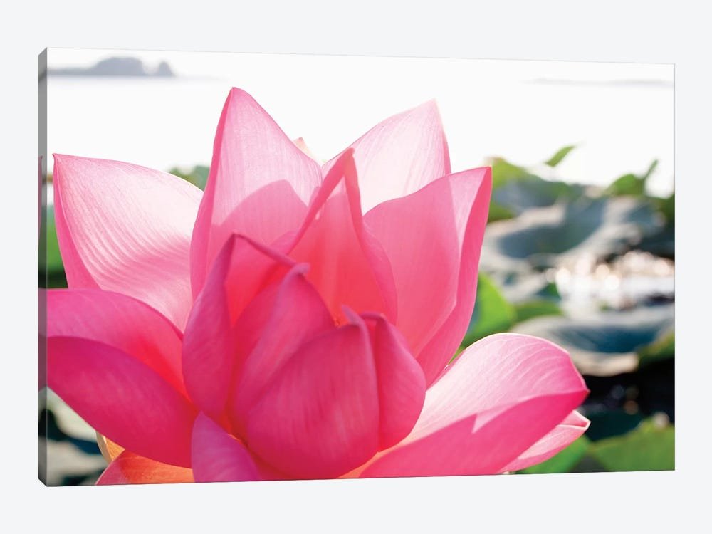 Close-Up Of A Lotus Flower In Full Bloom by Michele Molinari 1-piece Canvas Art Print