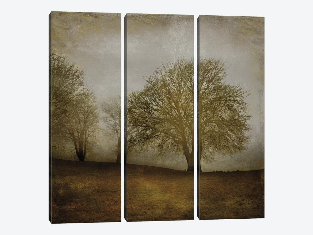 Morning Meditation II by Madeline Clark 3-piece Canvas Print