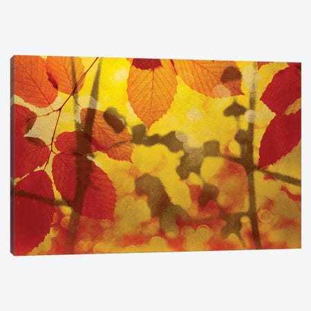 Golden Foliage Canvas Print #MCM21} by James McMasters Canvas Print
