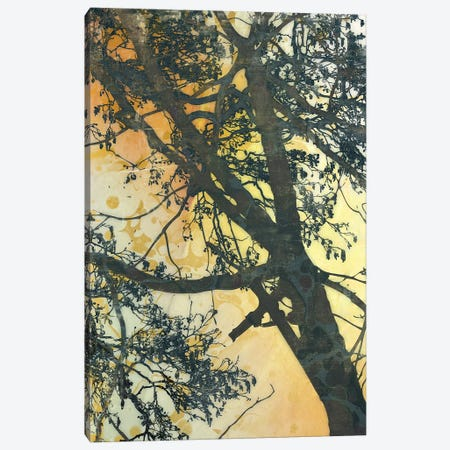 Bubbly Branches Canvas Print #MCM7} by James McMasters Canvas Print