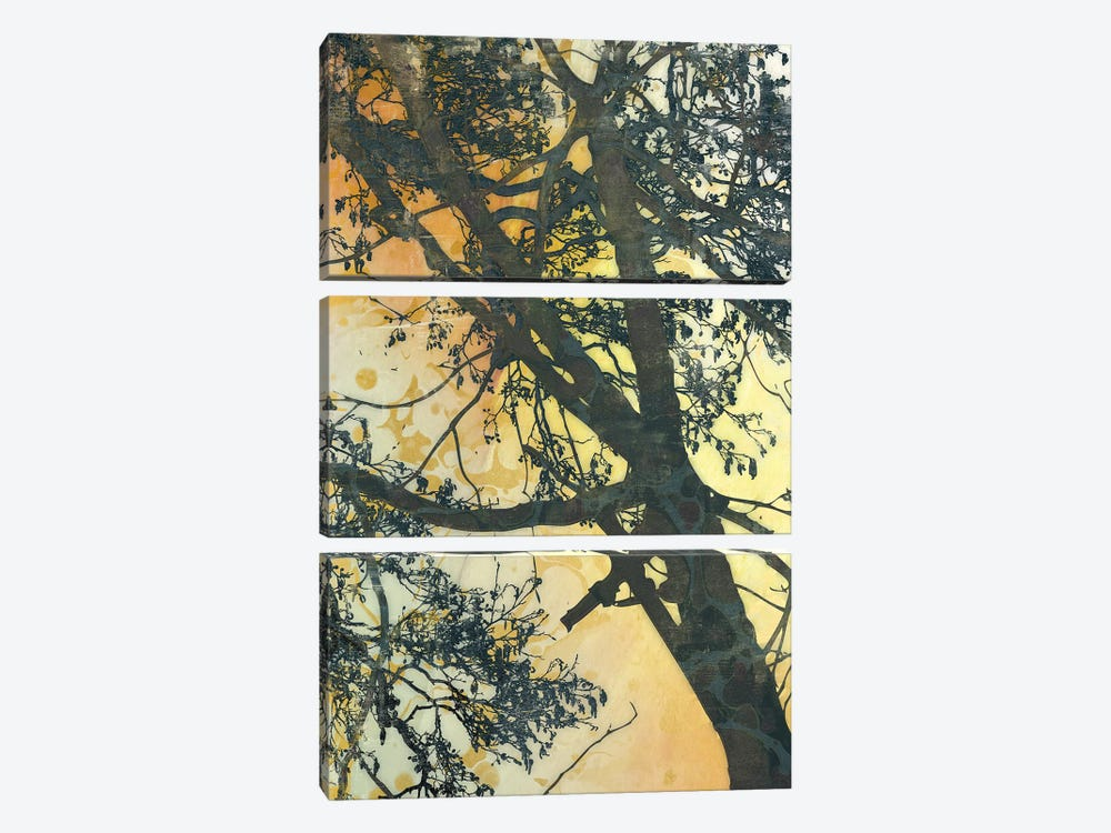 Bubbly Branches by James McMasters 3-piece Canvas Art