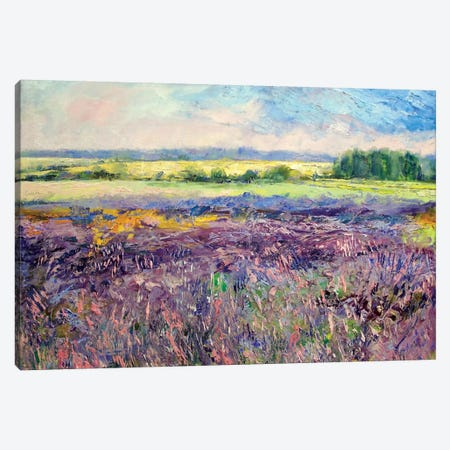 Provence Lavender Canvas Print #MCR108} by Michael Creese Canvas Art
