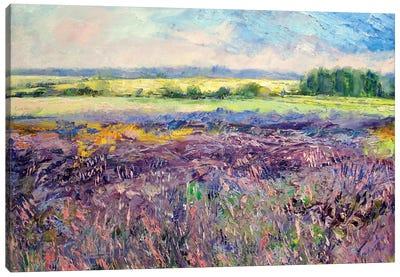 Provence Lavender Canvas Print #MCR108
