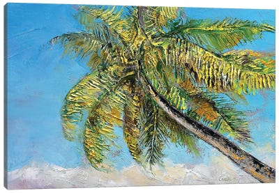 Windy Palm Canvas Print #MCR149