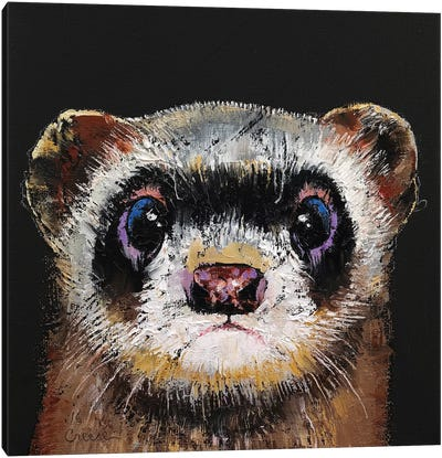 Ferret  Canvas Art Print