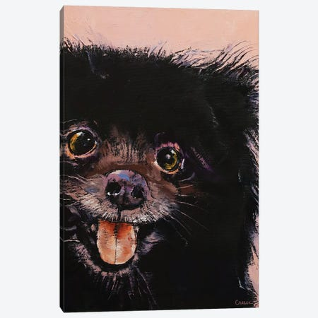 Black Pomeranian Canvas Print #MCR220} by Michael Creese Canvas Print