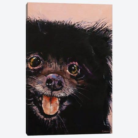 Black Pomeranian Canvas Print #MCR220} by Michael Creese Canvas Print