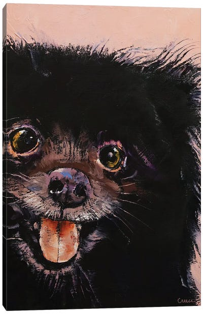 Black Pomeranian Canvas Art Print