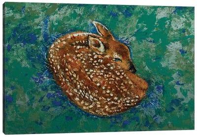 Sleeping Fawn Canvas Art Print