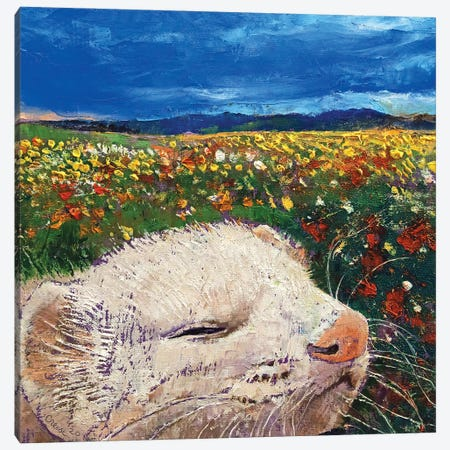Ferret Dreams Canvas Print #MCR249} by Michael Creese Canvas Art Print