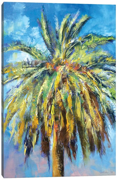 Canary Island Date Palm Canvas Print #MCR28