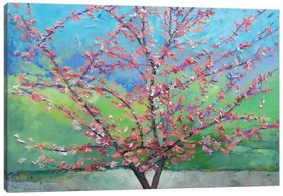 Eastern Redbud Tree Canvas Print #MCR39