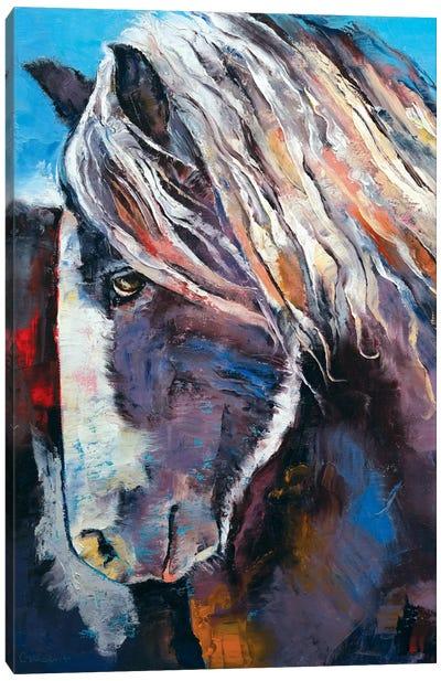 Highland Pony Canvas Print #MCR54