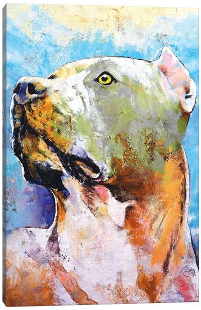 Pit Bull Canvas Print #MCR98