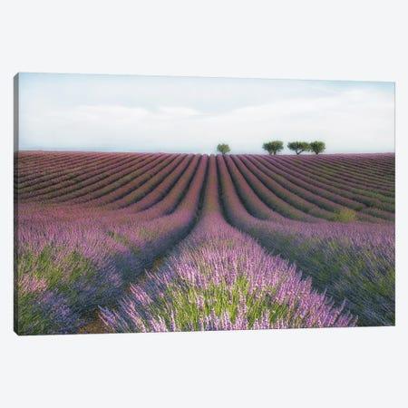 Velours de Lavender 3-Piece Canvas #MCZ1} by MC Canvas Art