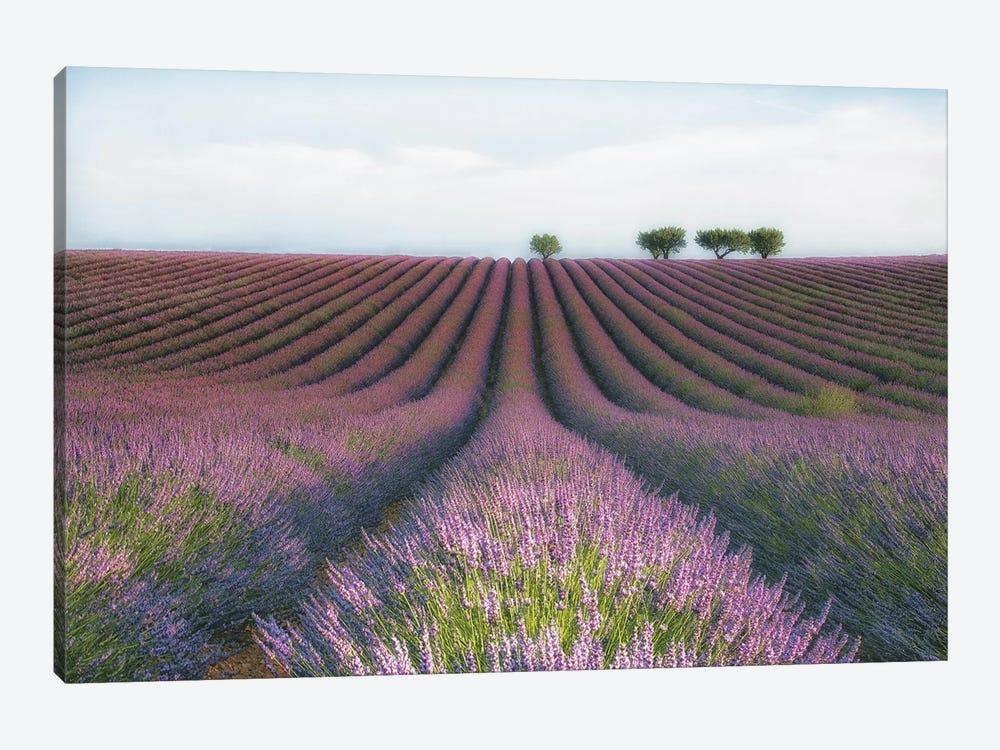 Velours de Lavender by MC 1-piece Art Print