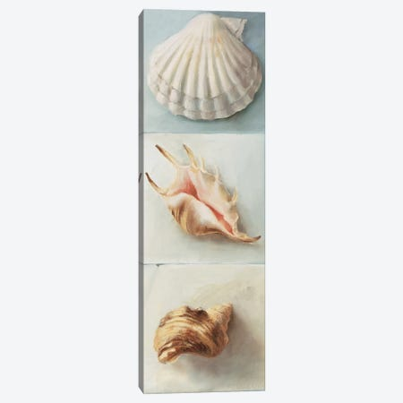 Shell Selection I Canvas Print #MDC3} by Milieu du Ciel Canvas Art Print