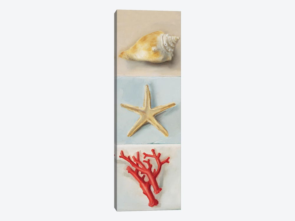 Shell Selection II 1-piece Canvas Art