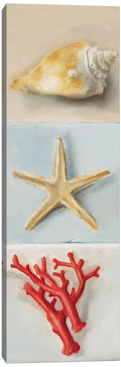 Shell Selection II Canvas Art Print