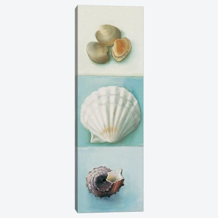 Shell Selection III Canvas Print #MDC5} by Milieu du Ciel Canvas Wall Art