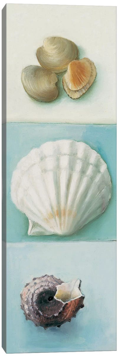 Shell Selection III Canvas Art Print