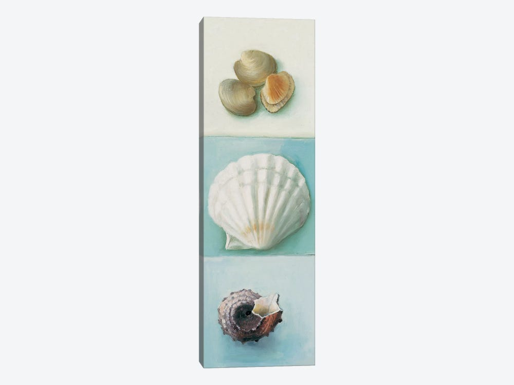 Shell Selection III by Milieu du Ciel 1-piece Canvas Print