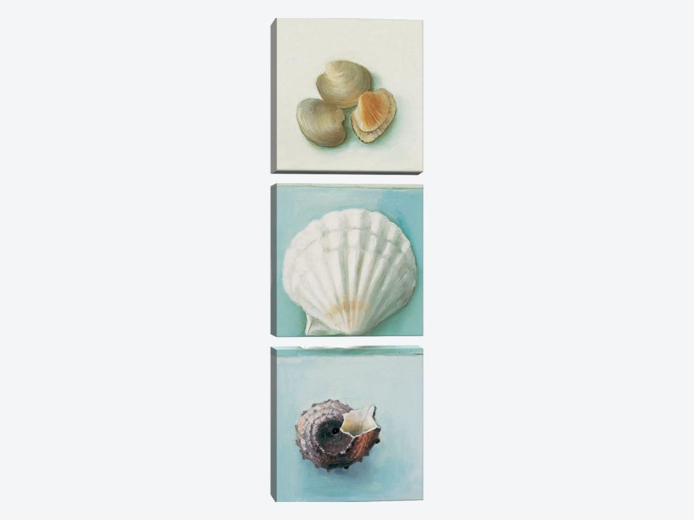 Shell Selection III by Milieu du Ciel 3-piece Canvas Print