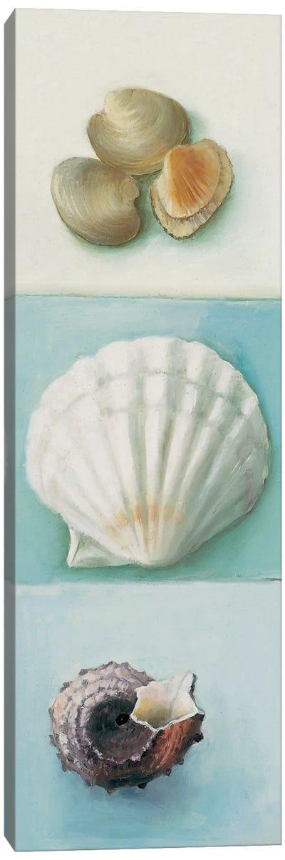 Shell Selection III Canvas Art Print