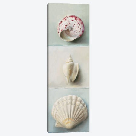 Shell Selection IV Canvas Print #MDC6} by Milieu du Ciel Canvas Art