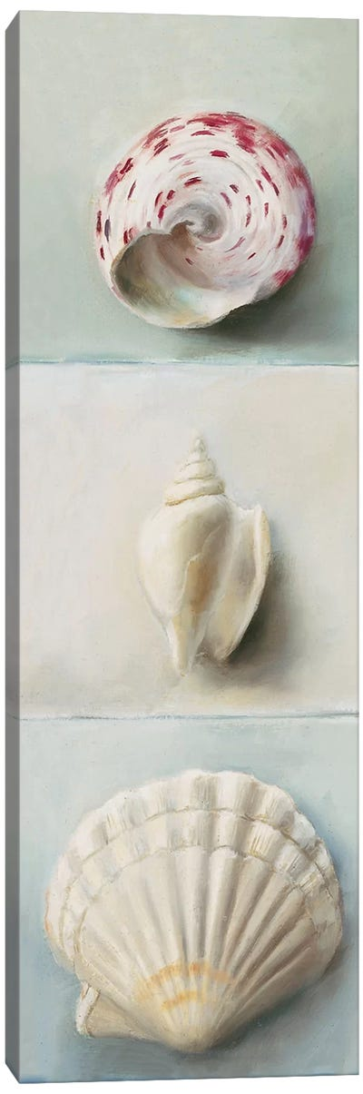 Shell Selection IV Canvas Art Print