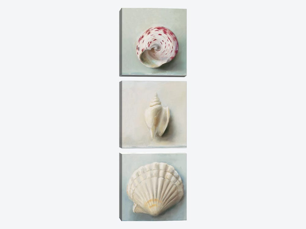 Shell Selection IV by Milieu du Ciel 3-piece Canvas Artwork
