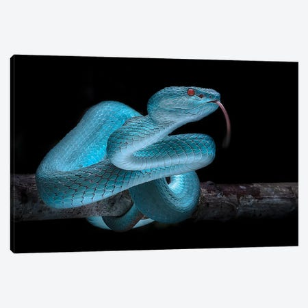 Blue Viper 3-Piece Canvas #MDD1} by Fauzan Maududdin Canvas Wall Art
