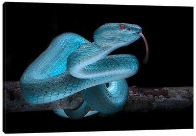Blue Viper Canvas Art Print