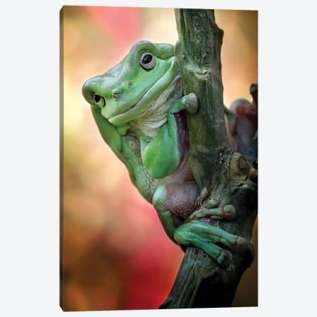 Big Fat Cute Tree Frog Canvas Print #MDD2} by Fauzan Maududdin Canvas Art
