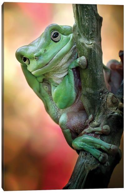 Big Fat Cute Tree Frog Canvas Art Print
