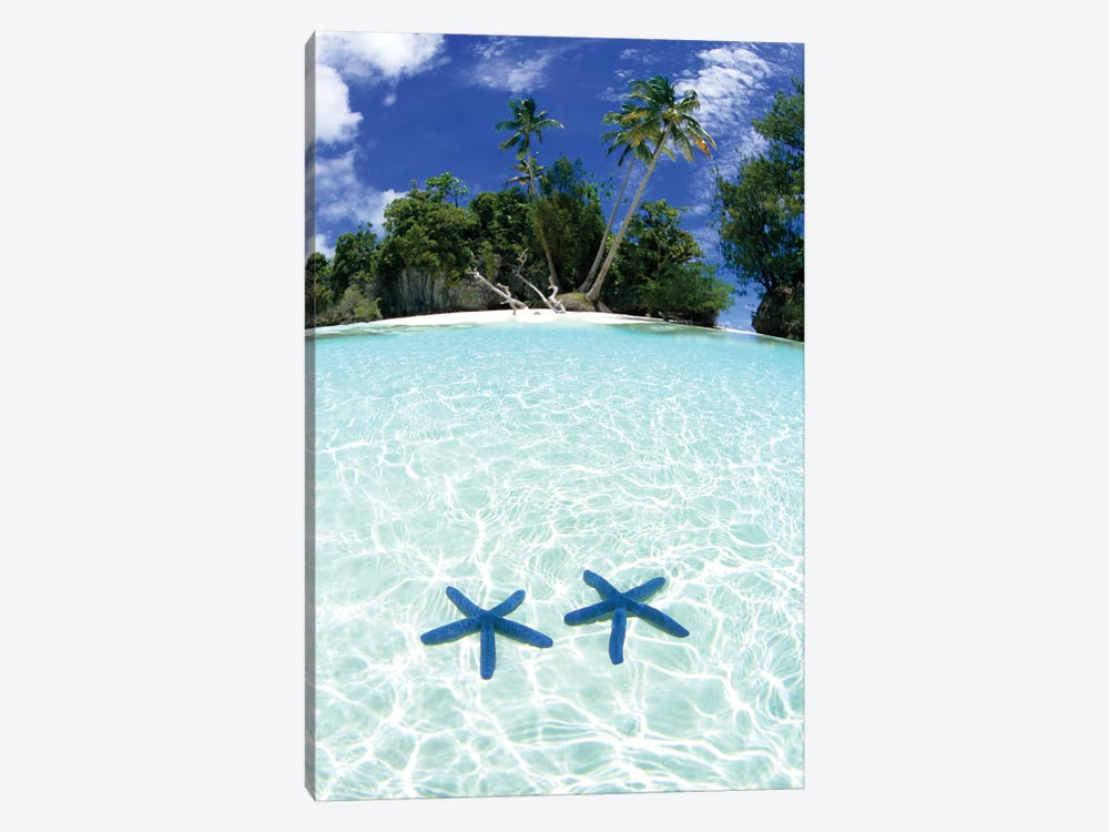 Two Sea Stars In Shallow Water, Rock Islands, Palau by Michael DeFreitas 1-piece Canvas Artwork
