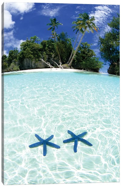 Two Sea Stars In Shallow Water, Rock Islands, Palau Canvas Art Print
