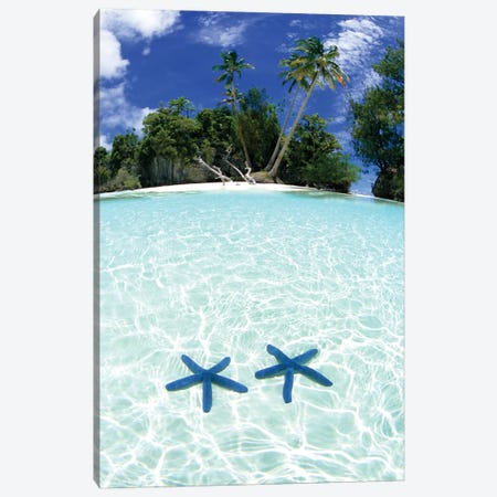 Two Sea Stars In Shallow Water, Rock Islands, Palau Canvas Print #MDE2} by Michael DeFreitas Canvas Art Print