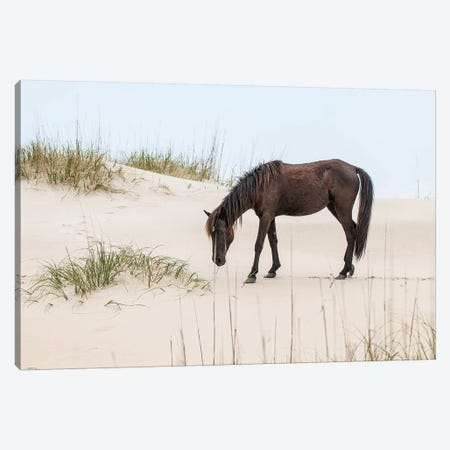 Lone Banker Horse On The Beach, Currituck National Wildlife Refuge, Outer Banks, North Carolina, USA Canvas Print #MDE9} by Michael DeFreitas Art Print