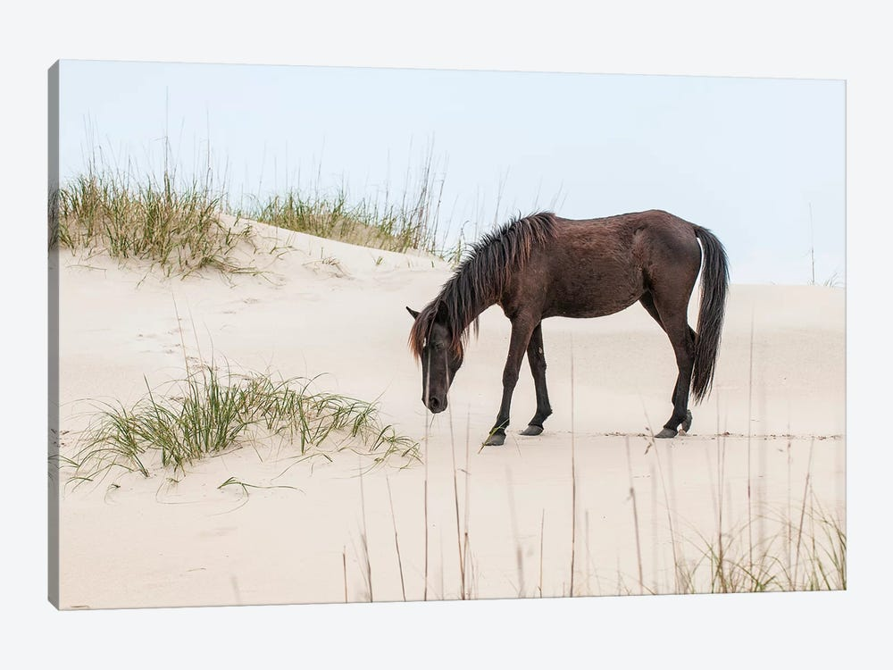 Lone Banker Horse On The Beach, Currituck National Wildlife Refuge, Outer Banks, North Carolina, USA by Michael DeFreitas 1-piece Art Print