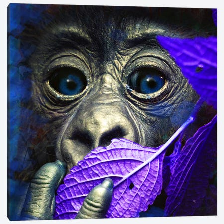 Mr. Little (Ape) Canvas Print #MDH6} by Mascha de Haas Canvas Print