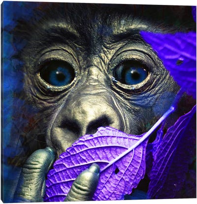 Mr. Little (Ape) Canvas Art Print