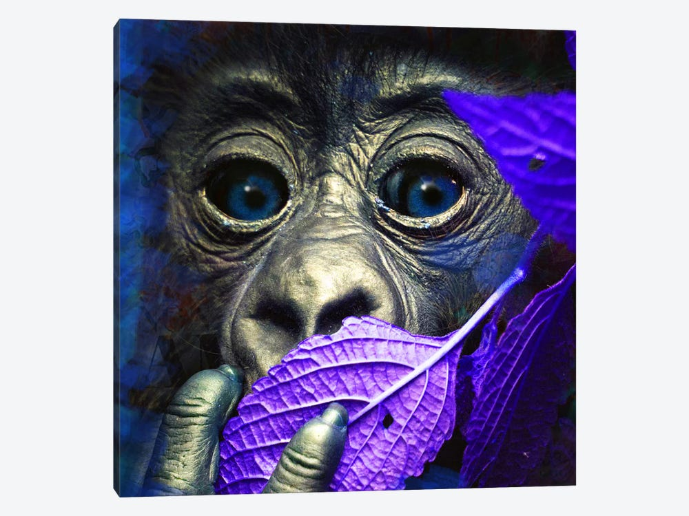 Mr. Little (Ape) by Mascha de Haas 1-piece Canvas Print