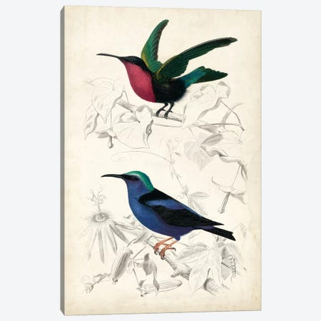 D'Orbigny Birds I Canvas Print #MDO1} by M. Charles D'Orbigny Art Print