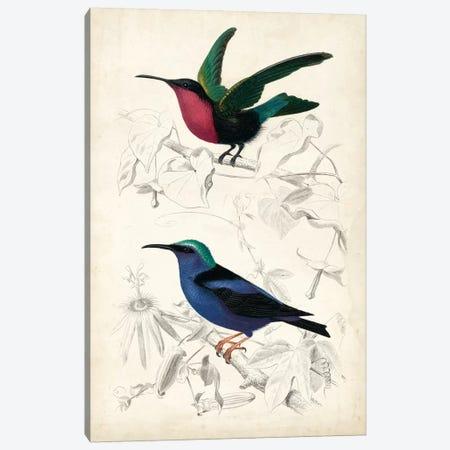 D'Orbigny Birds I Canvas Print #MDO1} by M. Charles D'Orbigny Art Print
