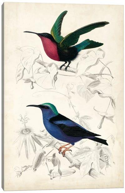 D'Orbigny Birds I Canvas Art Print