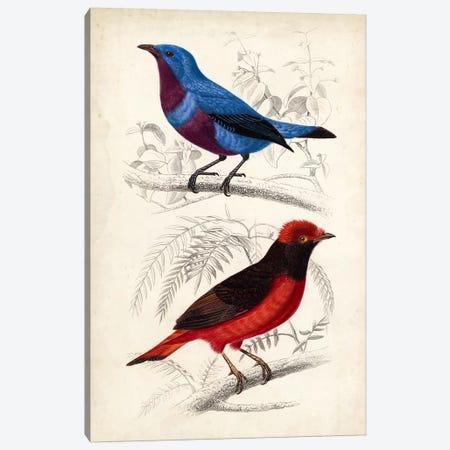 D'Orbigny Birds II Canvas Print #MDO2} by M. Charles D'Orbigny Art Print