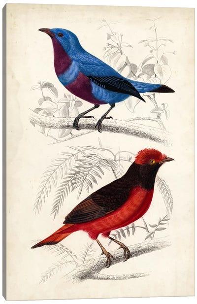 D'Orbigny Birds II Canvas Art Print