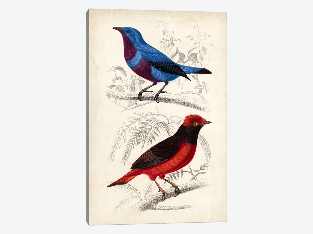 D'Orbigny Birds II by M. Charles D'Orbigny 1-piece Canvas Artwork