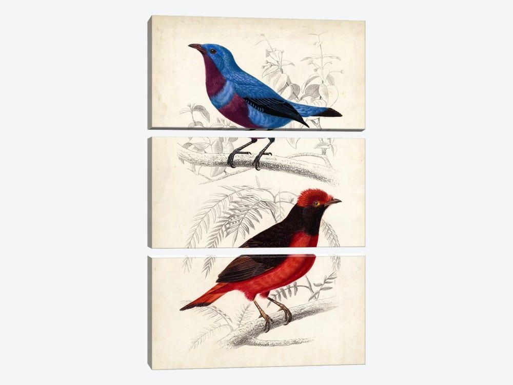 D'Orbigny Birds II by M. Charles D'Orbigny 3-piece Canvas Art